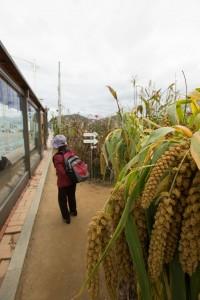 Strange corn