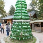 Soju Tree-1