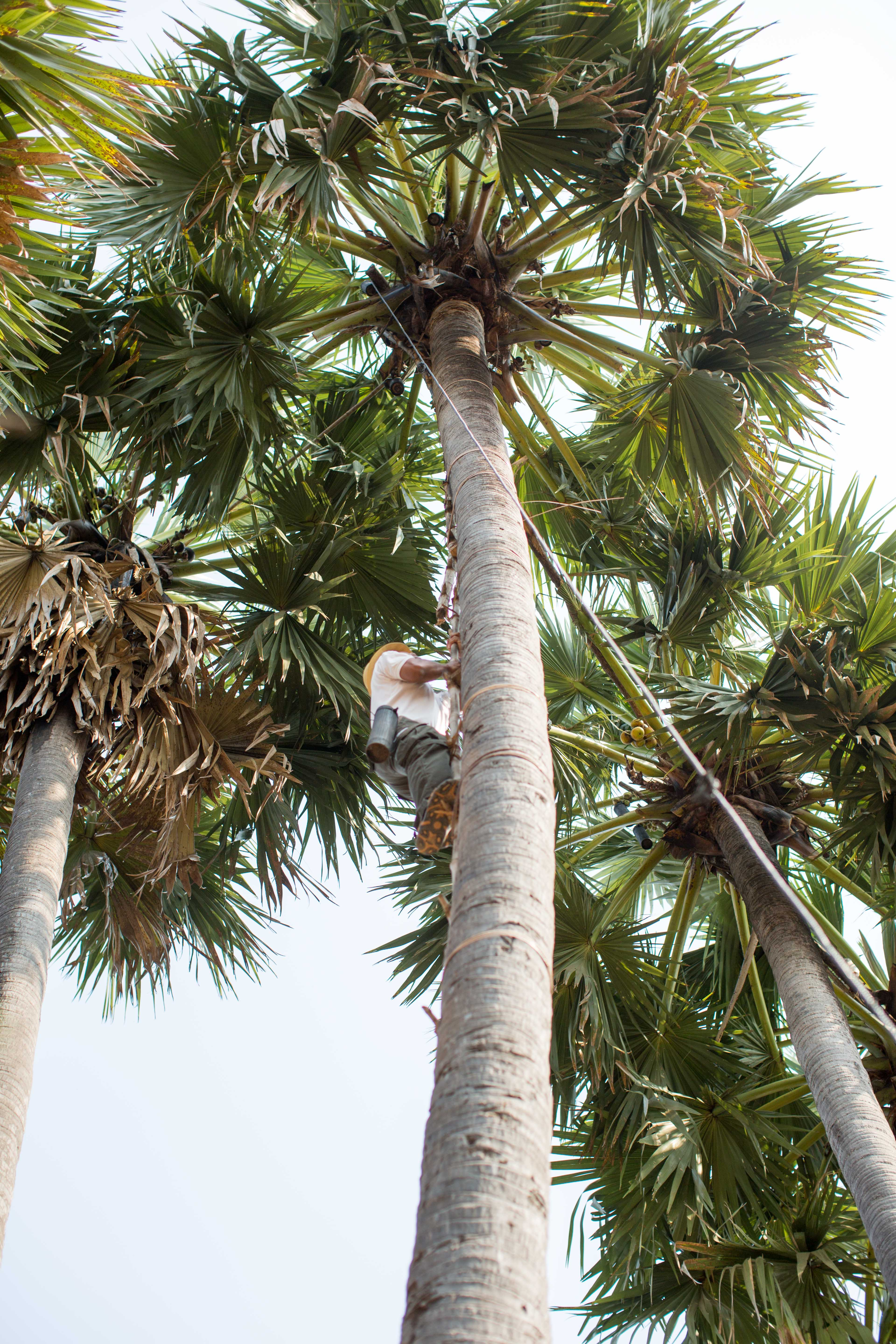 Get the coconut-1