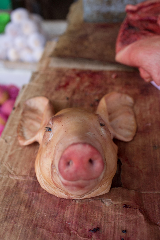 Pig Head-1