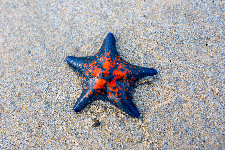 Sea Star-1